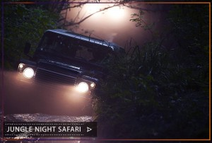 jungle-night-sfari