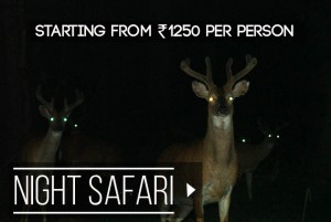 night-safari-rate
