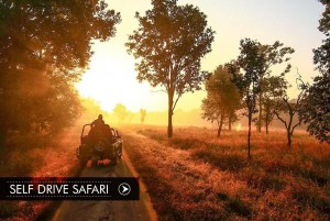 self-drive-safari_compressed