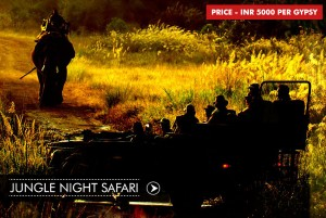 jugnle-night-safari