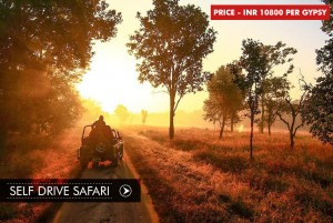 self-drive-safari