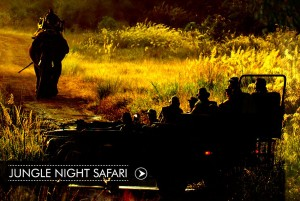 homepage-image-junglenightsafari_compressed