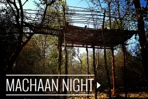machaan-night